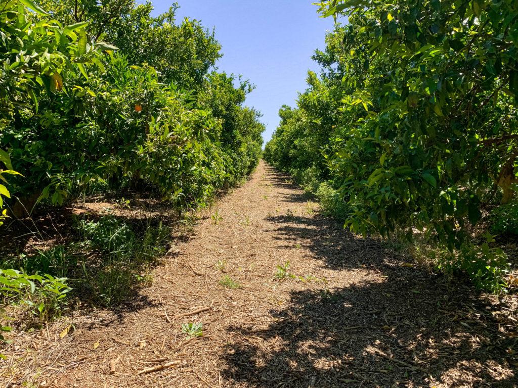 agricultura tradicional en transición ecológica