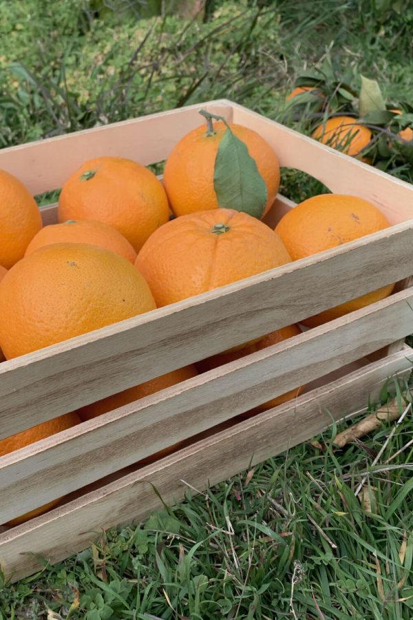 naranjas naturales en transición ecológica