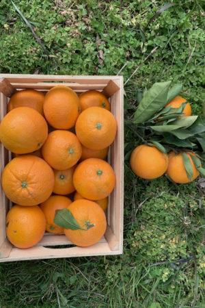 caja naranjas 100% naturales y sin pesticidas